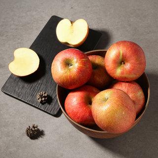 사과(부사) 5-11입(봉)